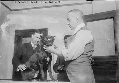 psi se uspješno liječe kod veterinara tek od kraja 18. stoljeća